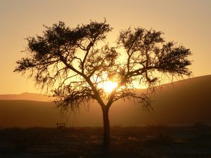 Sunset_Tree_fs